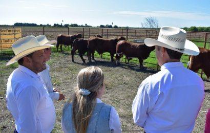 Con 224 sementales de registro, Gobierno de Tamaulipas fortalece la ganadería en la frontera