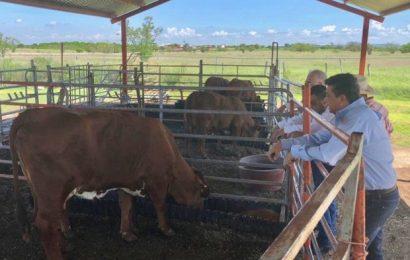 Impulsa Gobierno de Tamaulipas Programa de Mejoramiento Genético