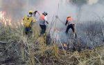 Alerta PC Ante Riesgos de Incendios Forestales