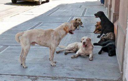 Investigan Mutilación de Perros en Zacatecas