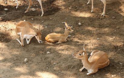 Zoológico de Tamatán y el CIE tienen nuevos inquilinos